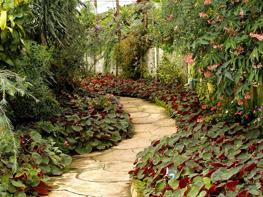 Jardineras para tu jardin MIC Multiservicios