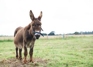 Donkey Walking in West Sussex