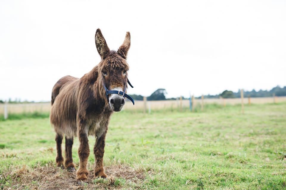 Donkey Perehill John
