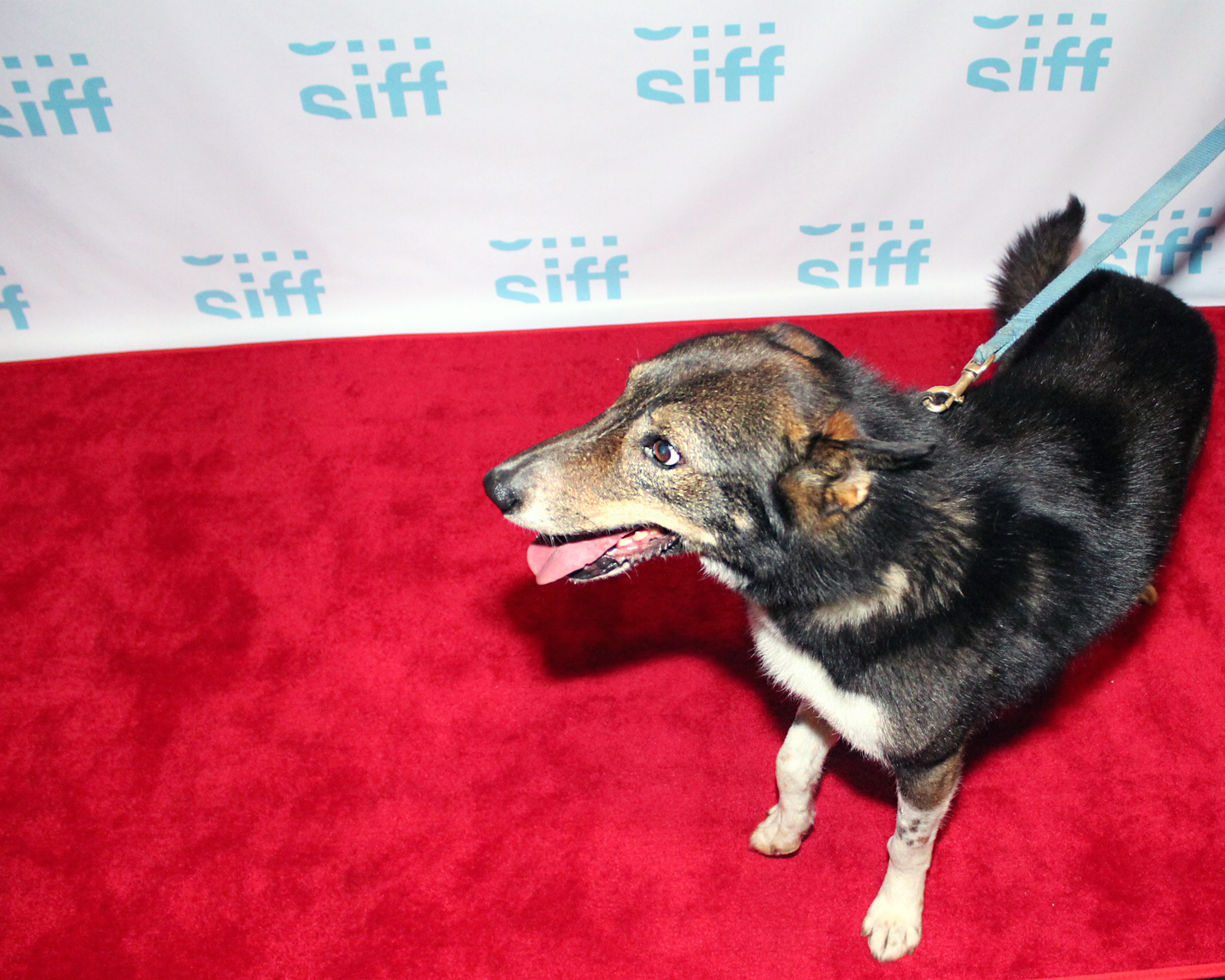 Amp on the SIFF red carpet