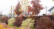 ландшафтный дизайн Дусклык ракурс 5.jpg