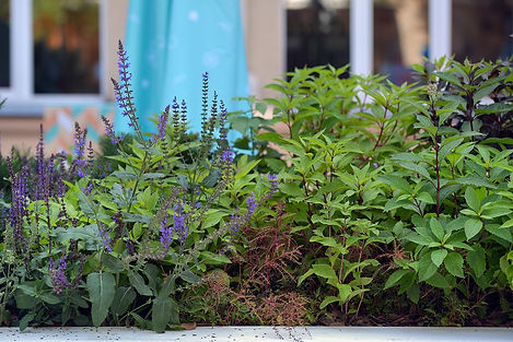 городской сад Цветочный Джем ракурс 1_ed