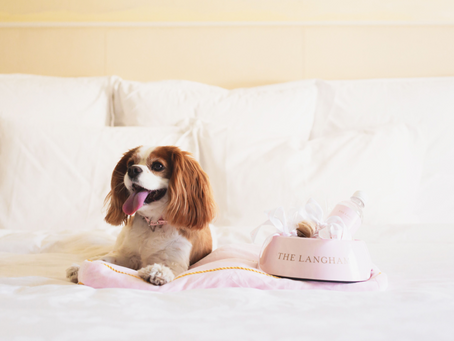Pampered Pets package at The Langham