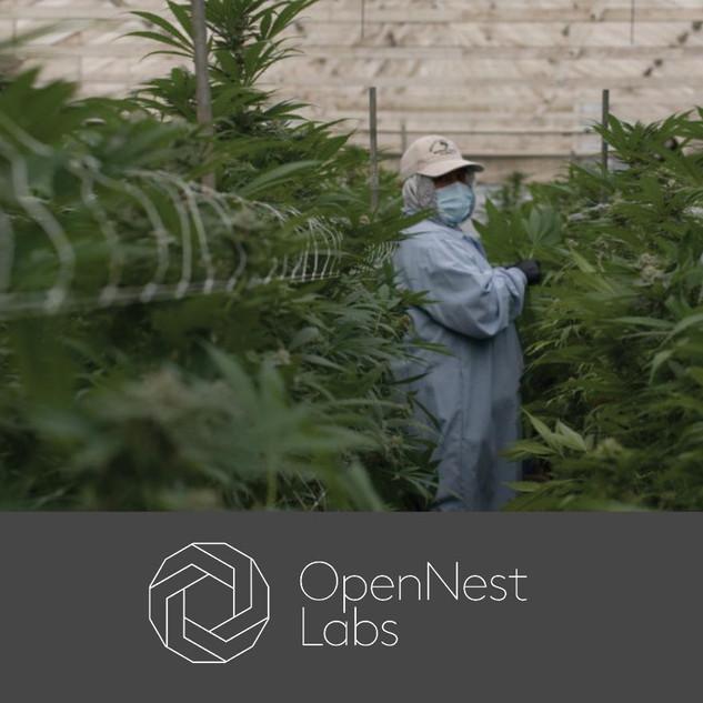 A Cannabis Venture Studio