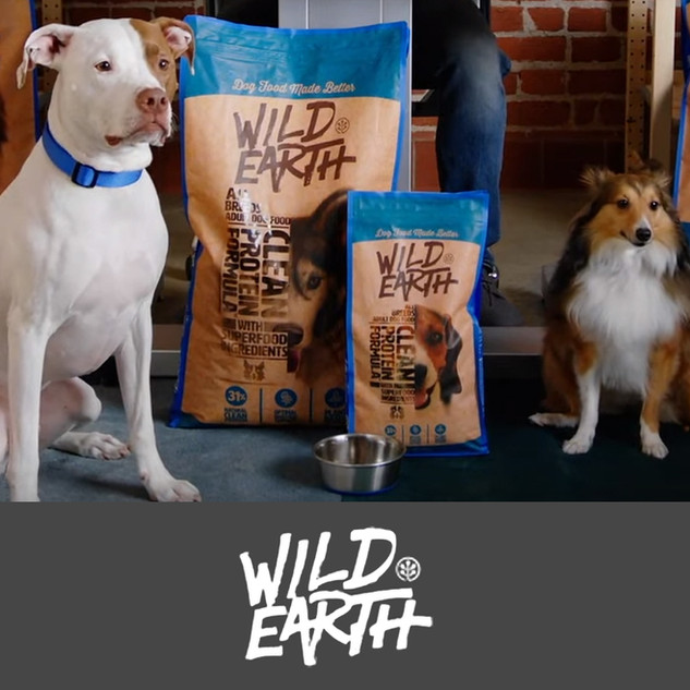 Vegan dog food made from truly clean protein