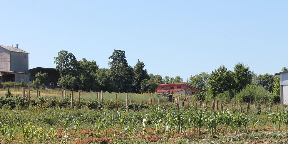 Ökologische Landwirtschaft am Boierhof