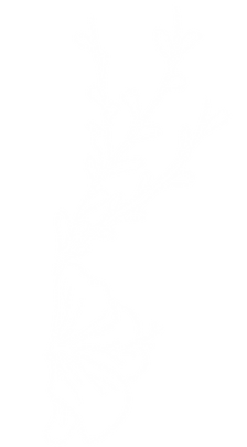 DGUOM flower template-14.png