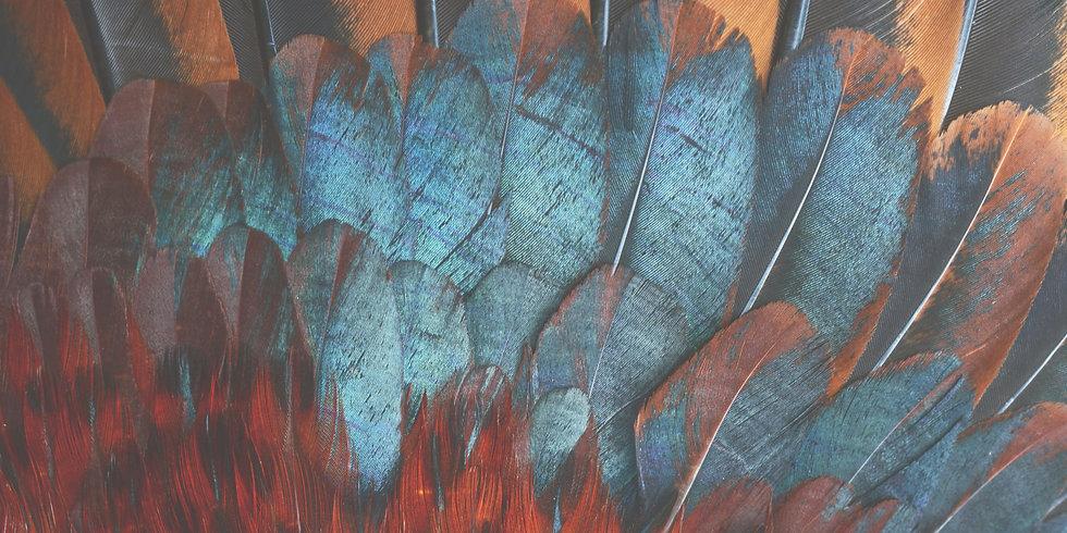 feathers2.jpg