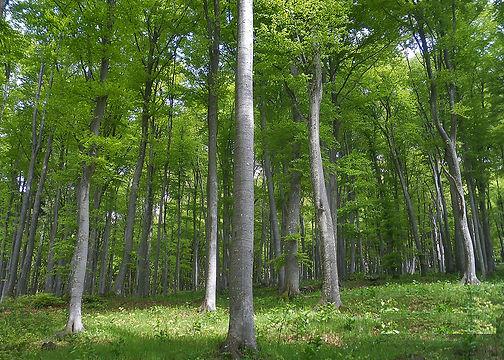 bosco.JPG