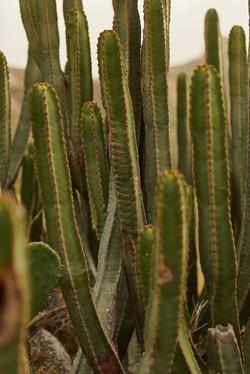 cactus tenerife aventure road trip