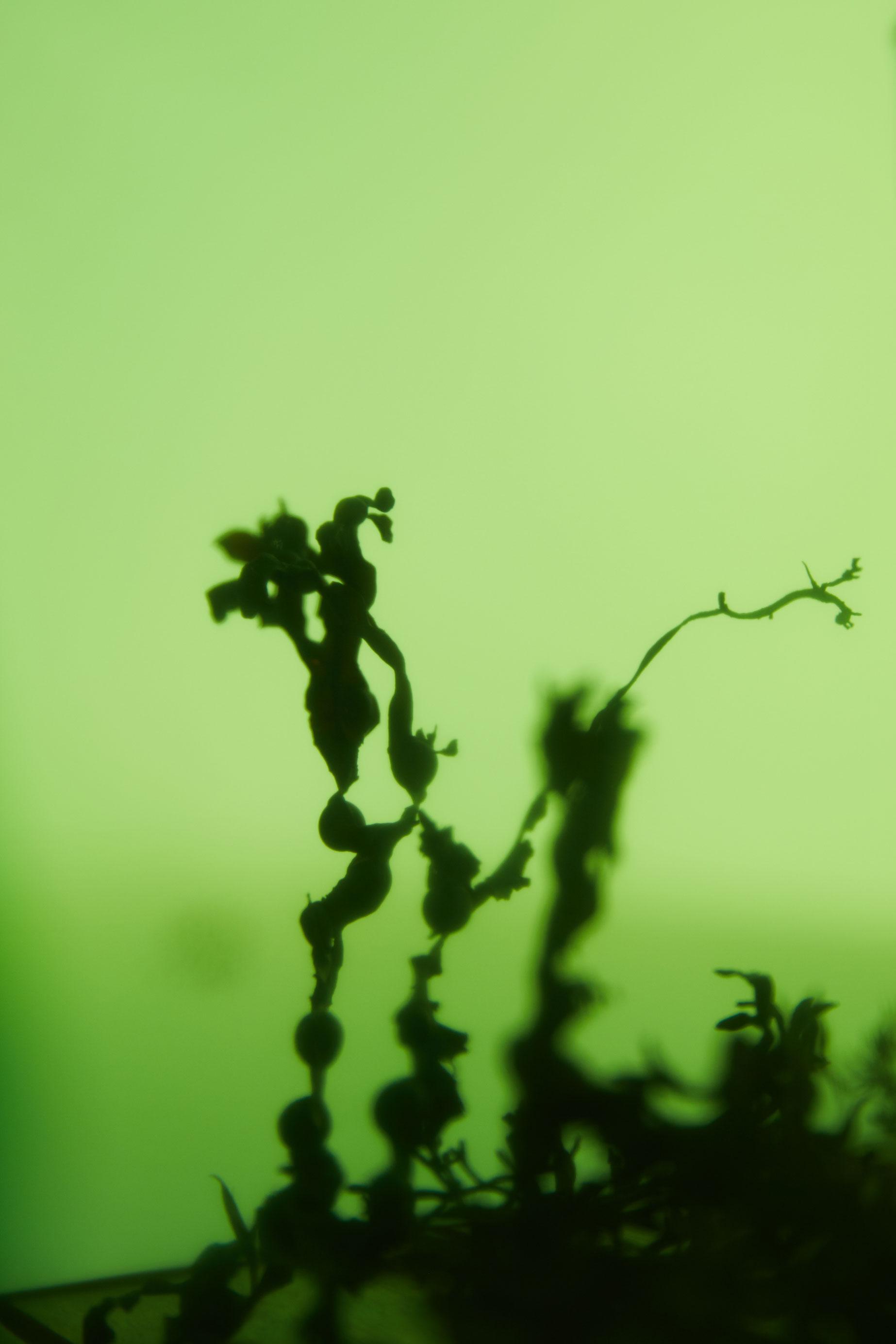 photographe nature morte bretagne brest