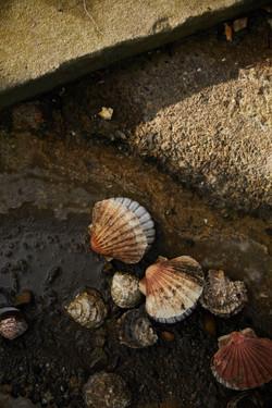 photographe reportage viviers