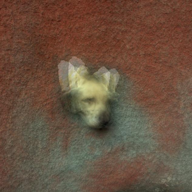 semi perro hundido
