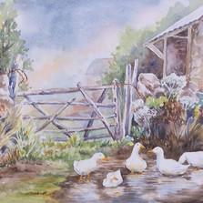 DucksAfter Rain Ducks3.jpg