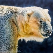 PolarBearLR.png