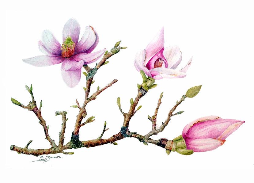 9625cce66af43594-1-MagnoliaBlossom.jpg