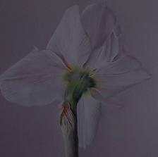 daffodil 4 copy.JPG