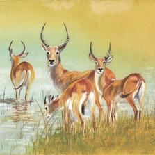 58-Antelope l.jpg
