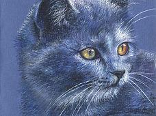 38-Blue Cat 200 dpi.jpg