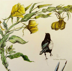 magpie and evening primrose