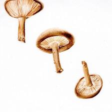 flying shitake mushrooms001 copy.jpg