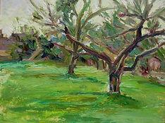 Apple Trees, Gt Somerford.JPG
