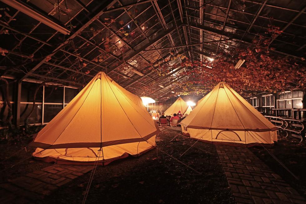 温室キャンプ