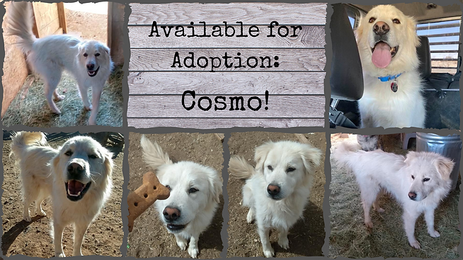 Available for Adoption_ Cosmo.png
