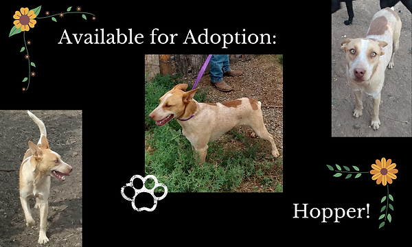 Available for Adoption_.png