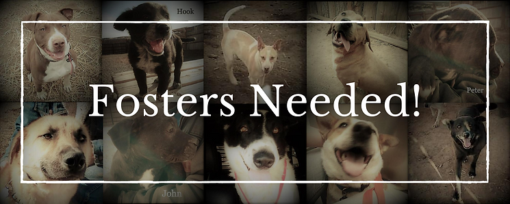 Fosters Needed! (2).png