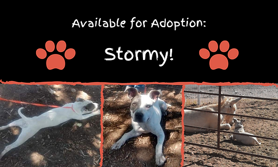 Available for Adoption_ Stormy!.png