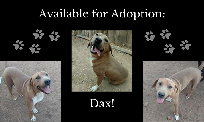 Available for Adoption_ (1).png