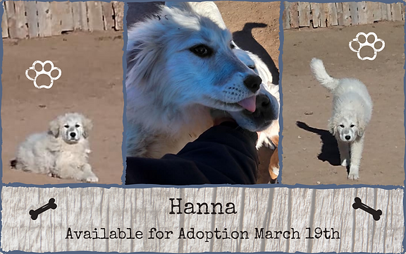 Hanna Available for Adoption March 19th.