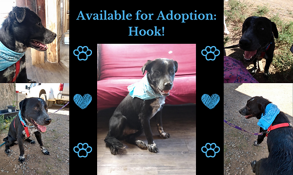 Available for Adoption_ Hook!.png