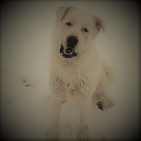 Snow (4).jpg