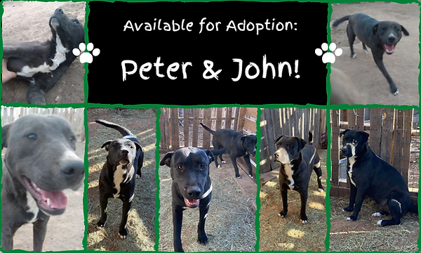Available for Adoption_ (9).png