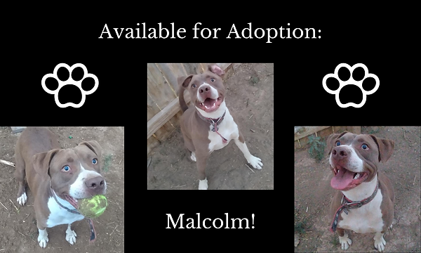 Available for Adoption_ (3).png