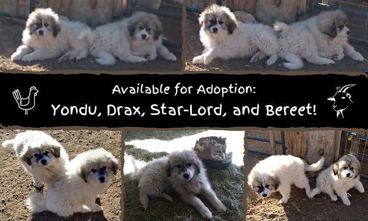 Available for Adoption_ Yondu, Drax, Sta
