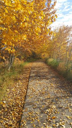 WALK THE TRAILS