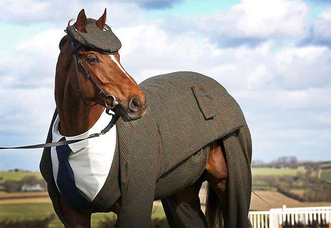 horse-suit.jpg