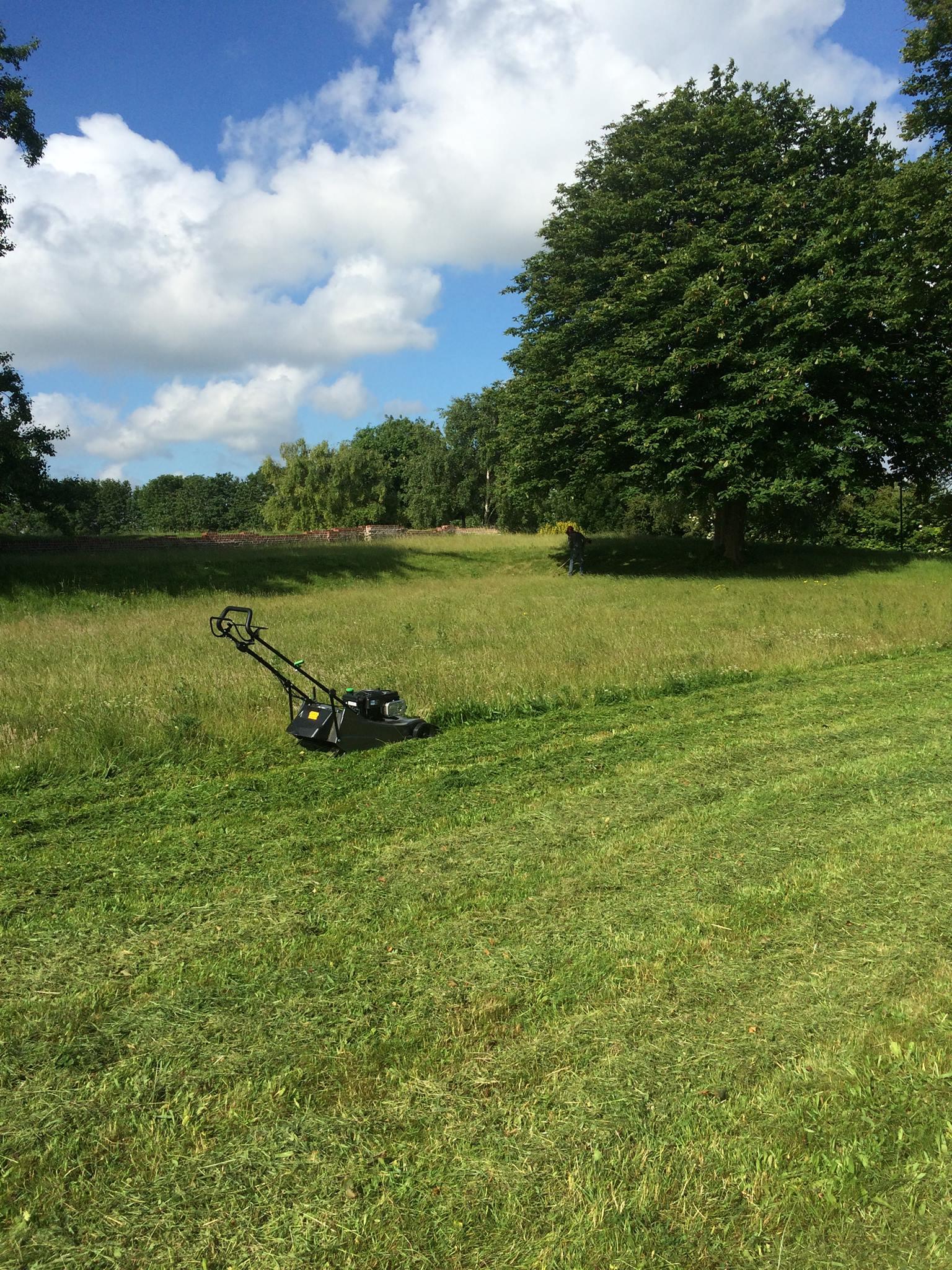 An overgrown grass area