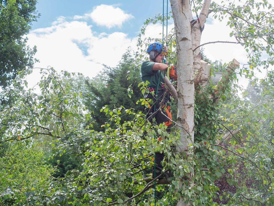 tree cutting-1-5.jpg