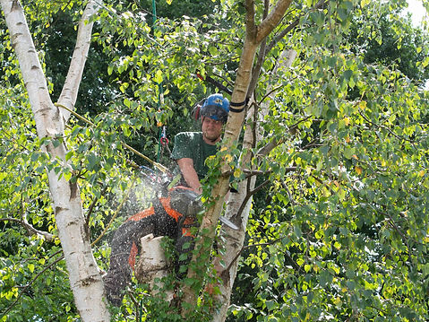 tree cutting-1-9.jpg
