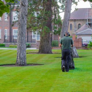 grass cut-1.jpg