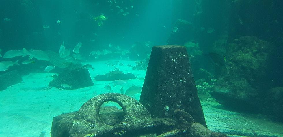Giant ray swimming underwater.jpg