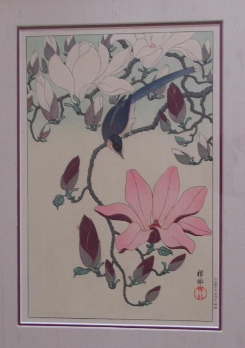 """""""Magnolia"""" Koson"""