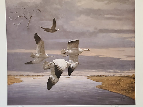 Return to Waterhen Print by Ted Long