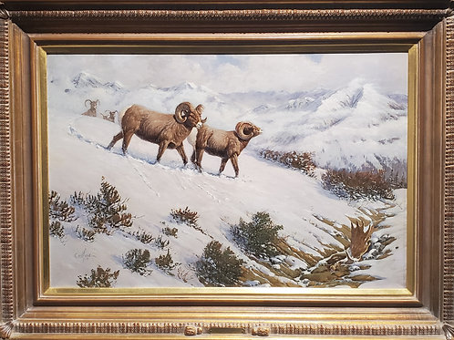 Beartooth Bighorns by Ted Long