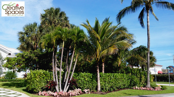 Boca Raton tropical classic