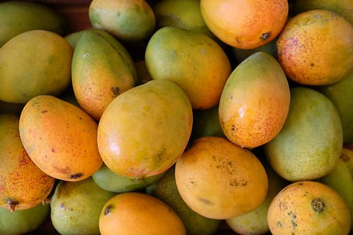 Caribbean Collection- Carrie mango tree